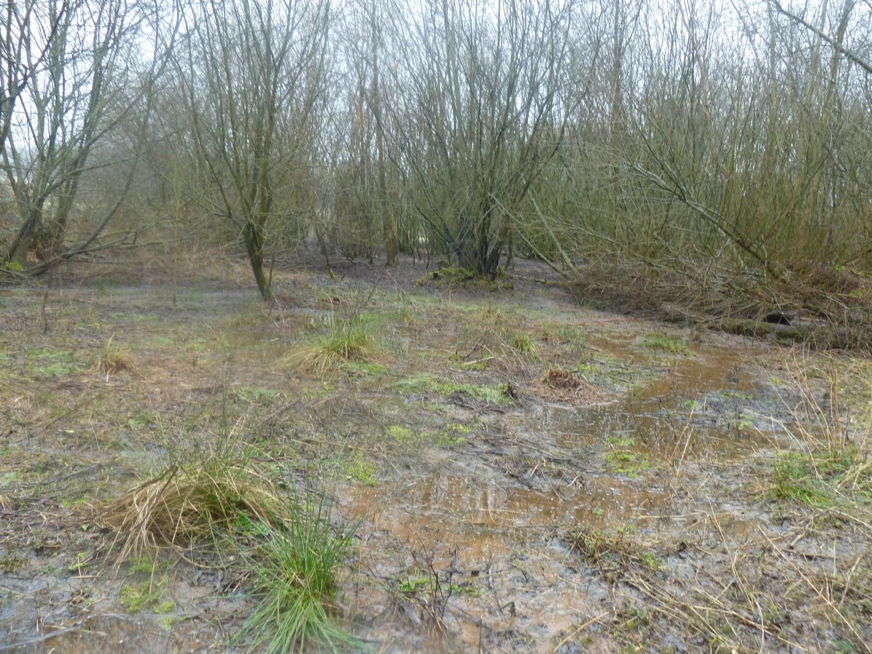 Wet Woodland Near Ardingly