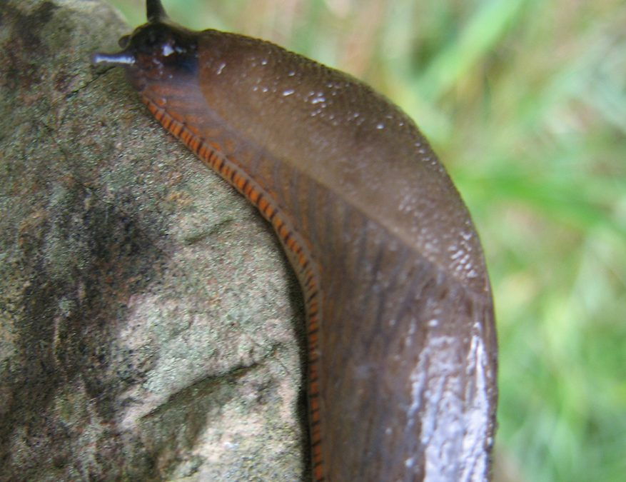 Alternative slug control methods