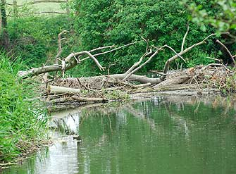 Woody debris benefits freshwater ecosystems