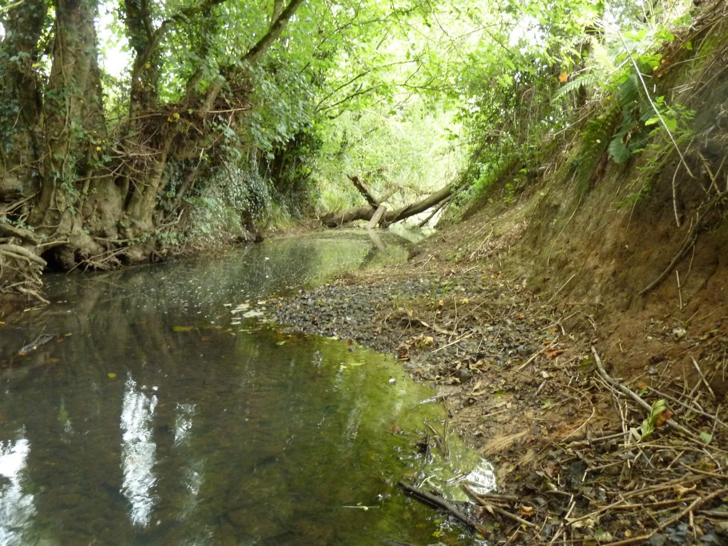 Wooded Area of the Longford Stream