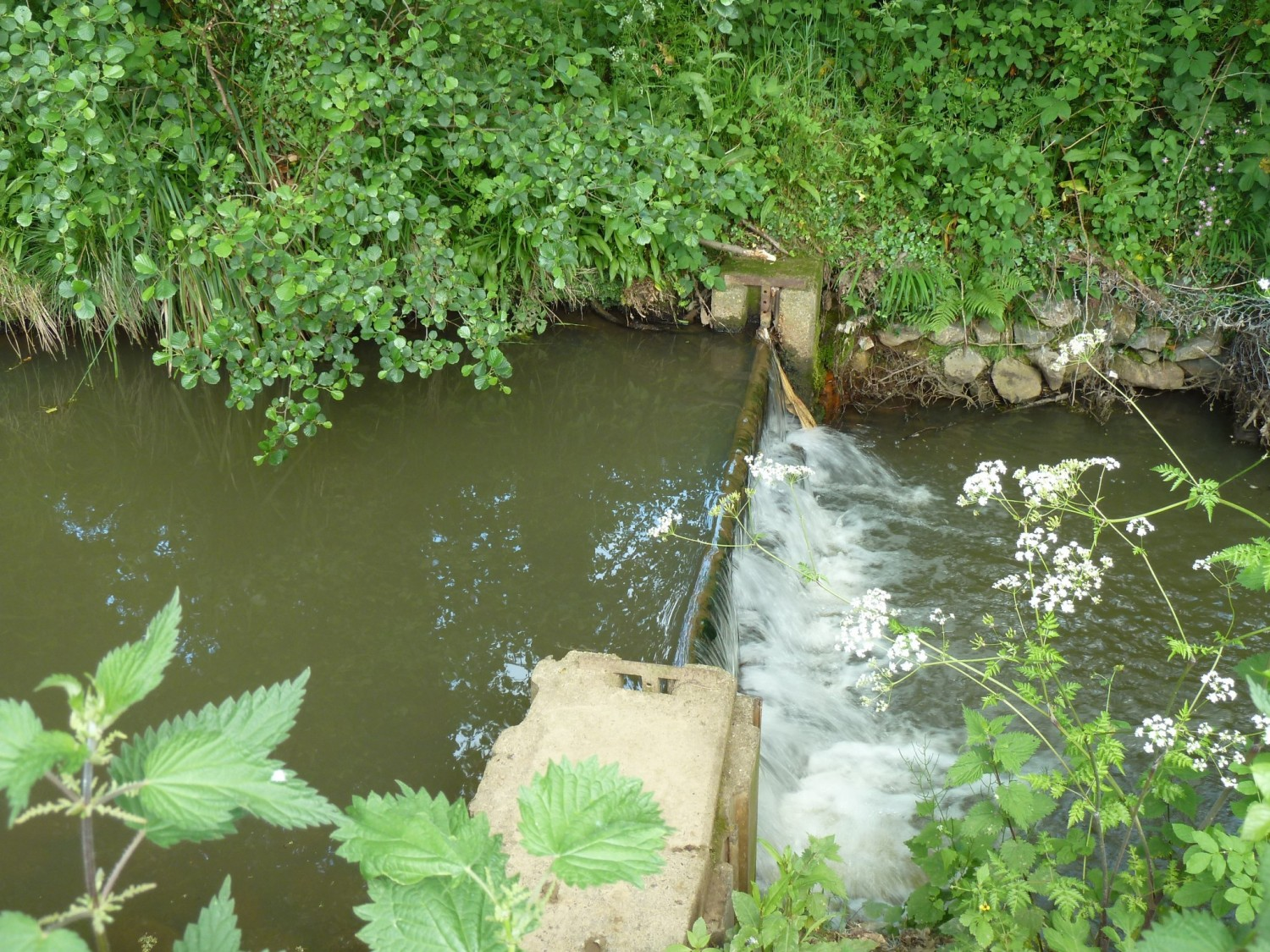 Small Retaining Weir on Scrase Stream