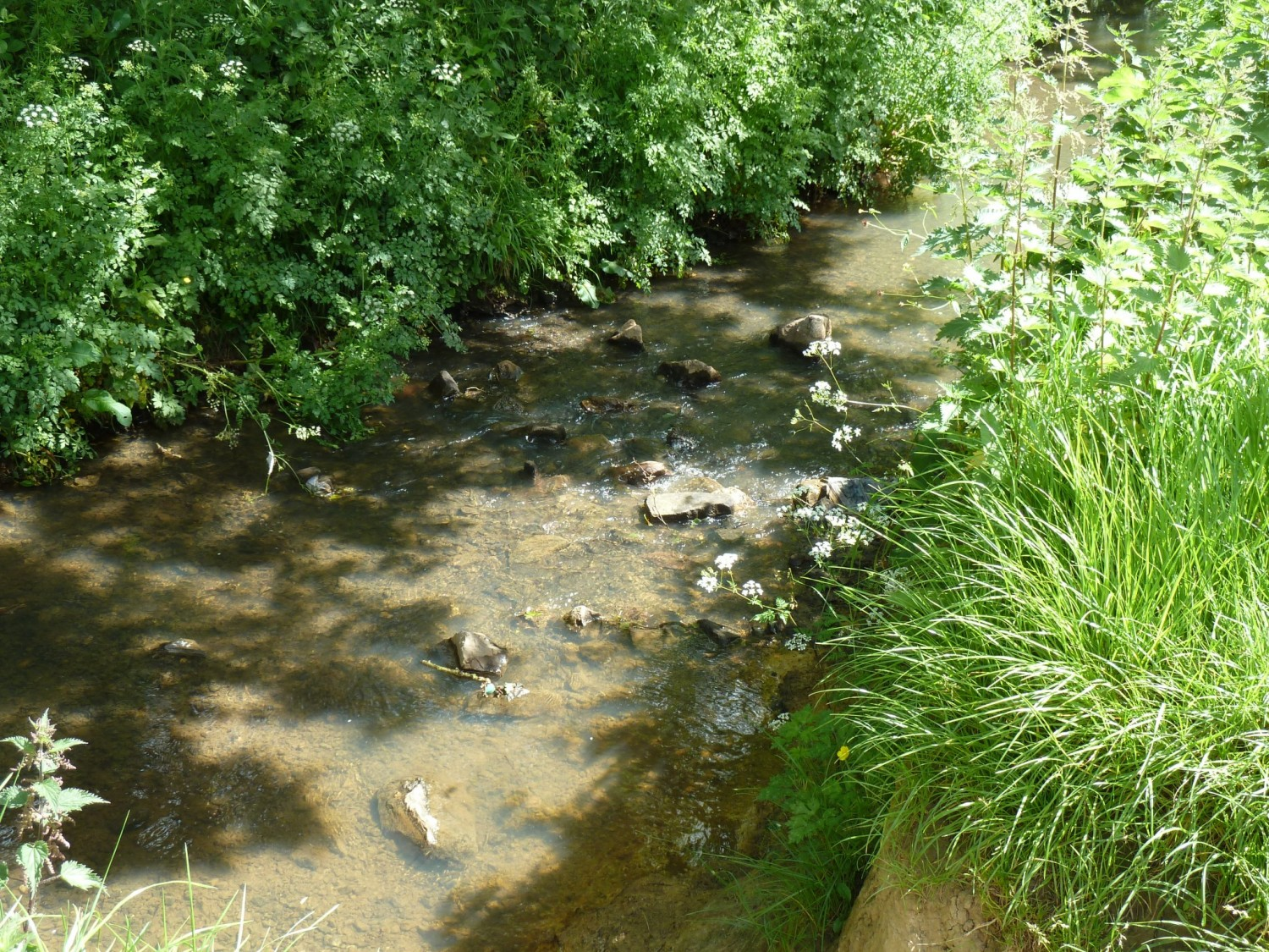 The Scrase Stream through Lindfield Nature Reserve