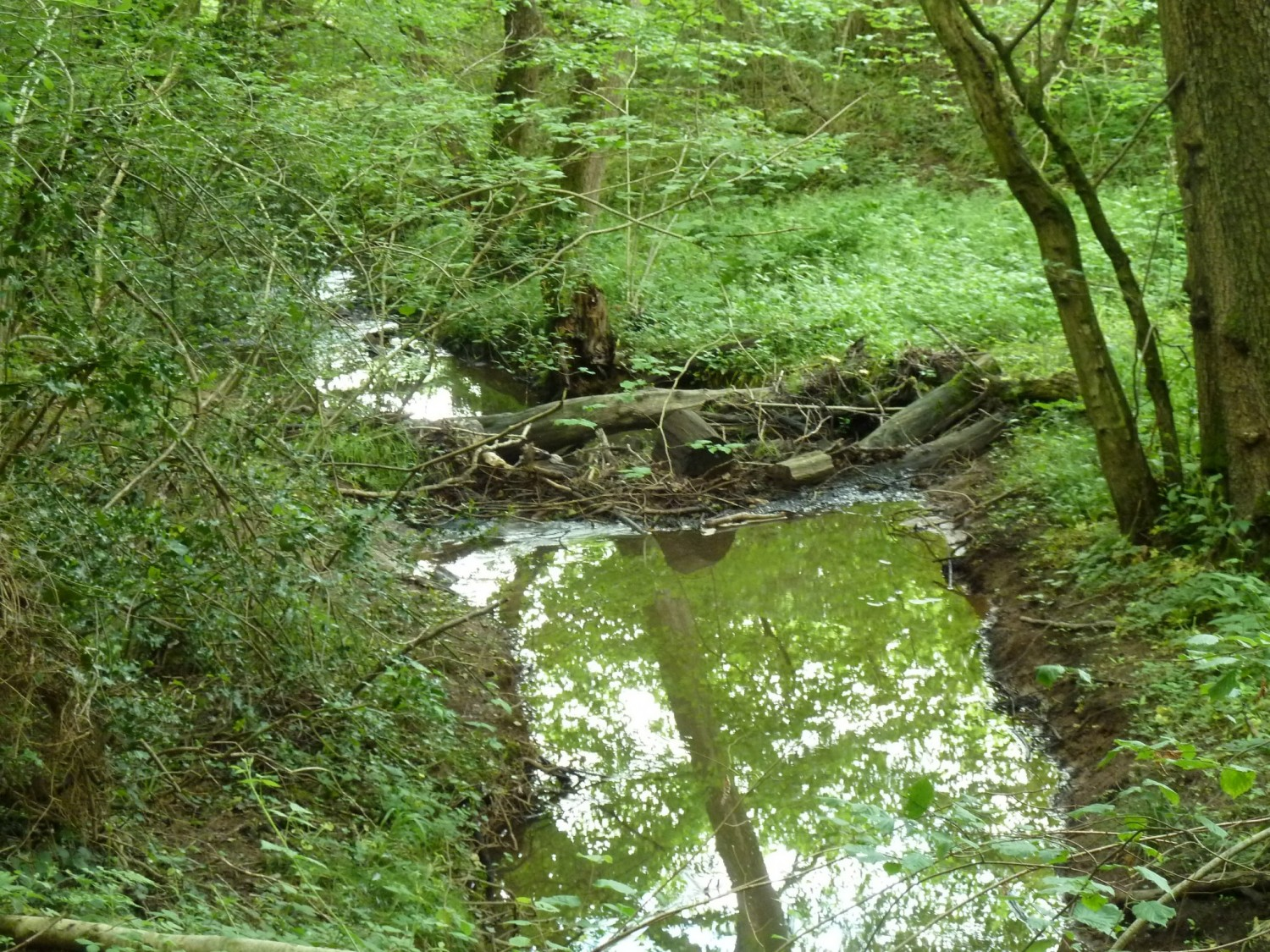 Woody Debris on the Shortbridge Stream