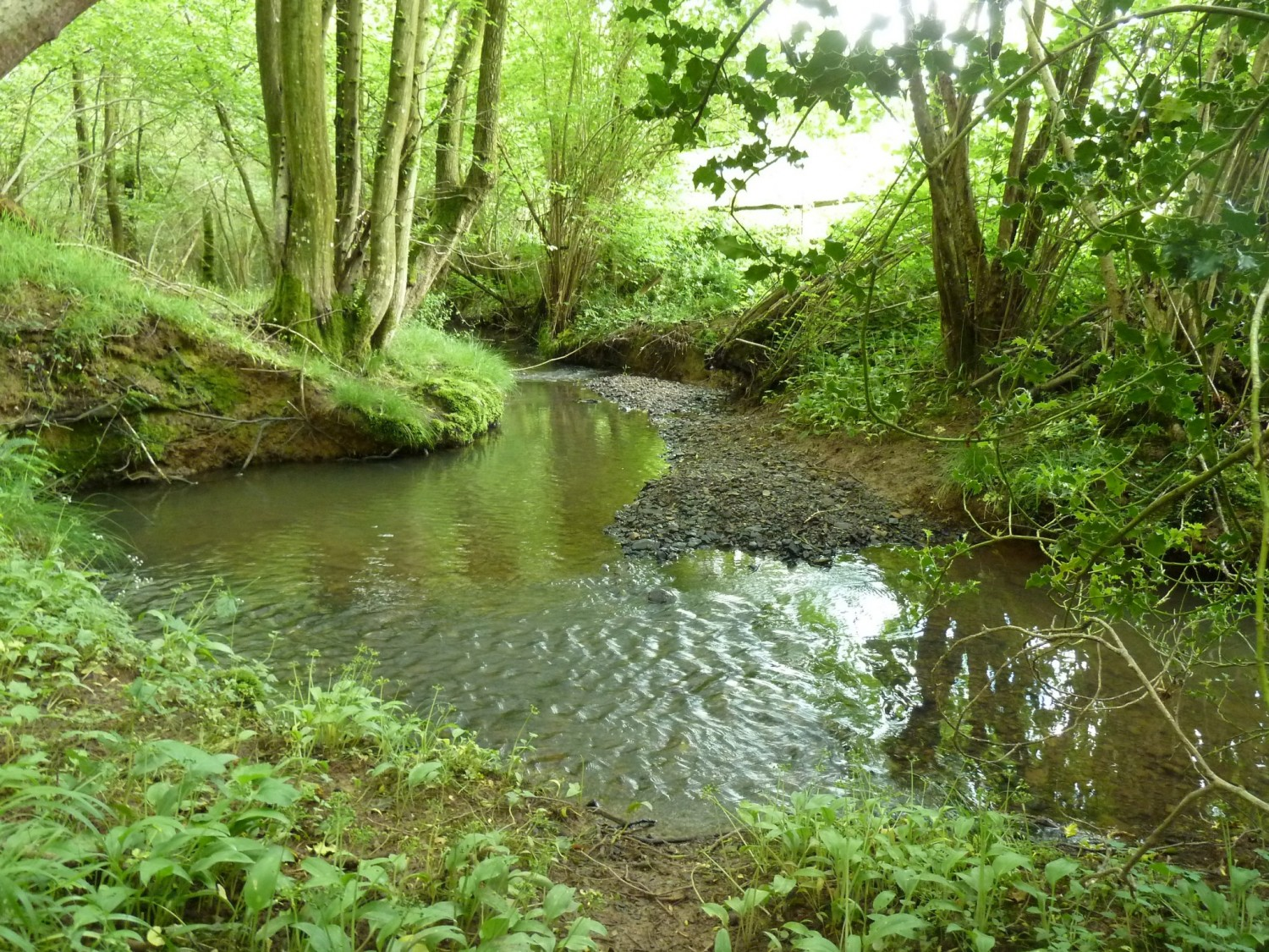 The Shortbridge Stream