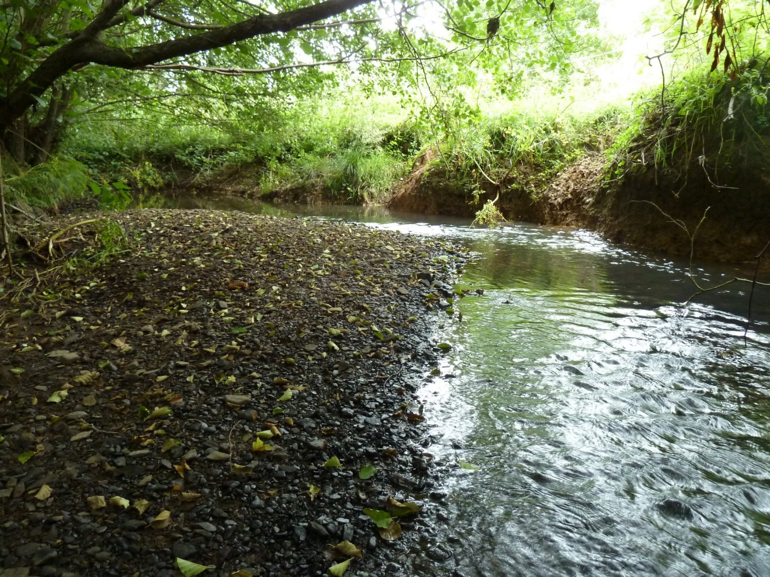 Gravel on the Shortbridge Stream