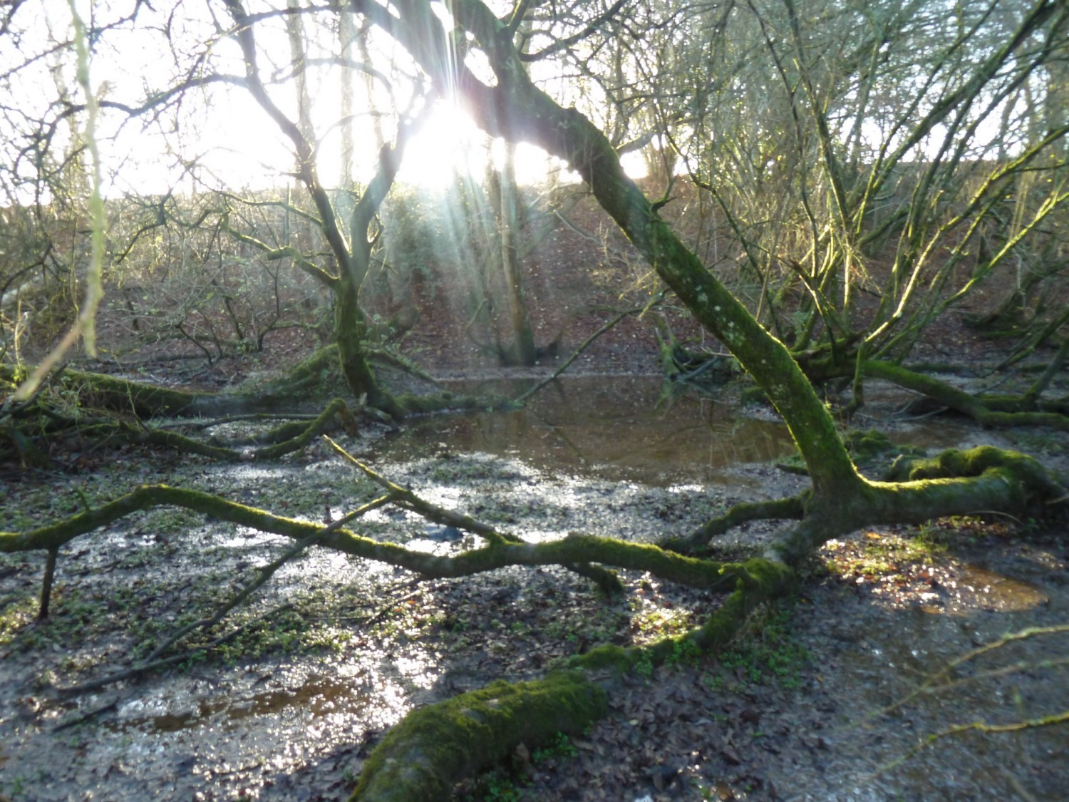 Wet Woodland on the Longford Stream