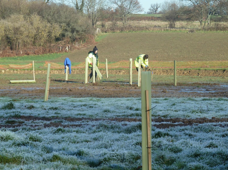Volunteers were Essential Spring Meadow