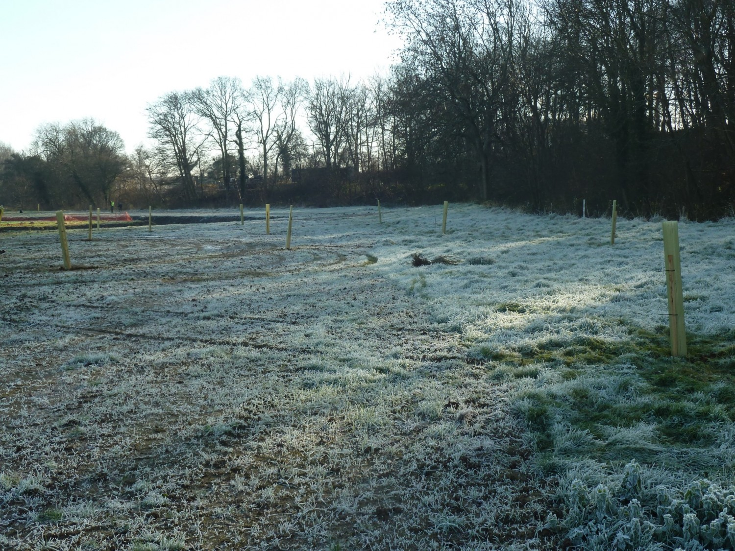 A Frosty Morning For Planting Spring Meadow