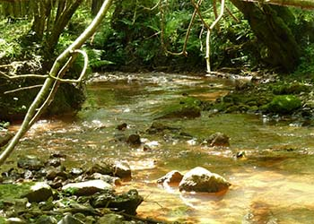 Help protect this sensitive ecological environment